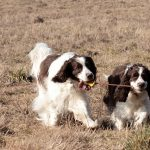 Tips for Working with Your Hunting Dog